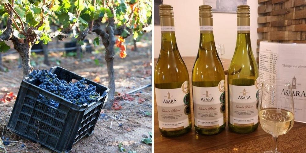 Asara Wine Estate and Hotel, The Best Wineries to Visit in Stellenbosch, Winerist