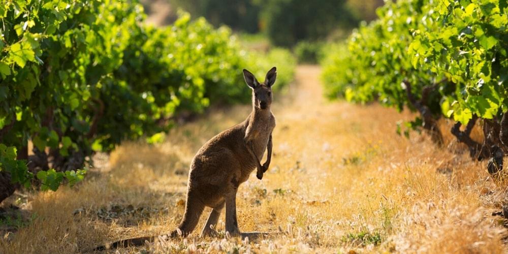 Beautiful Australia, Winerist