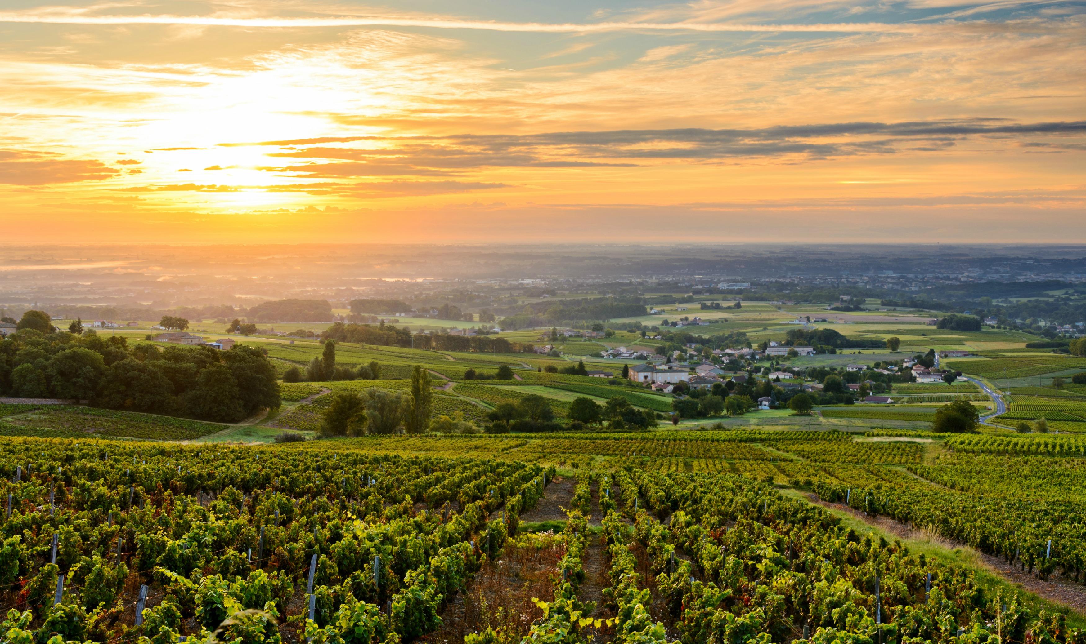 Sunset at Beaujolais Valley