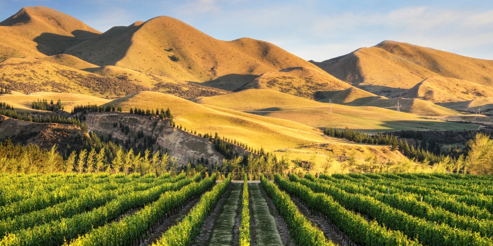 Canterbury, Wine Regions of New Zealand, Winerist