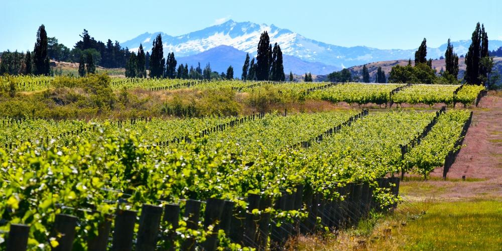 Central Otago, Wine Regions of New Zealand, Winerist