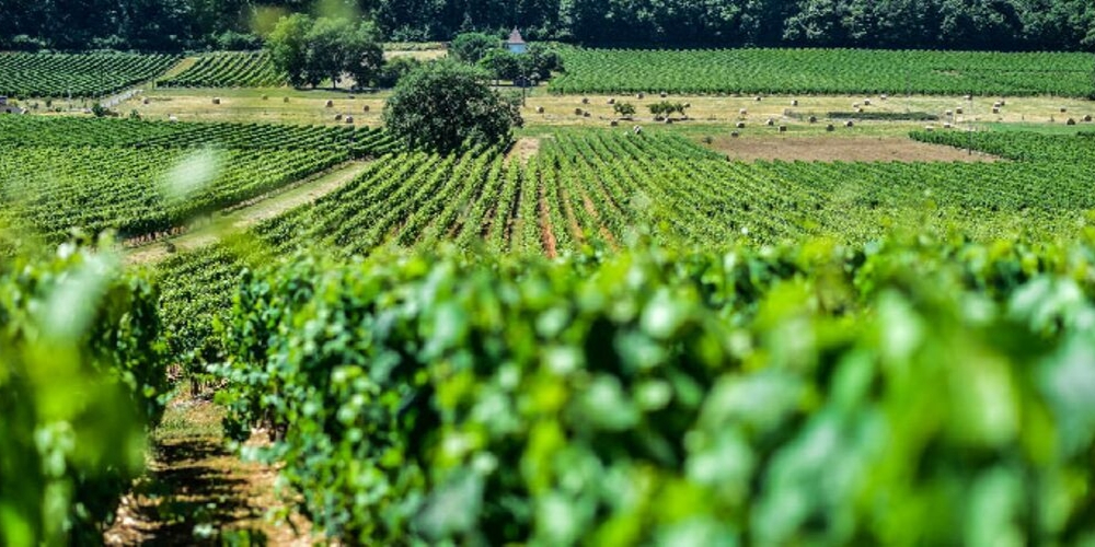Clos Triguedina winery in Cahors, Winerist