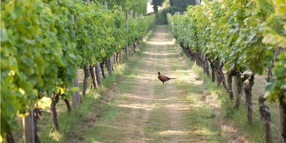 Danebury Vineyards Best Wineries in Hampshire Winerist