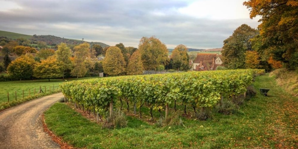 East Meon Vineyard Best Wineries in Hampshire Winerist