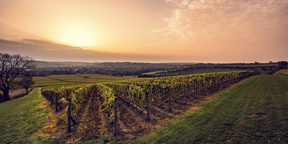 Exton Park Best Wineries in Hampshire Winerist