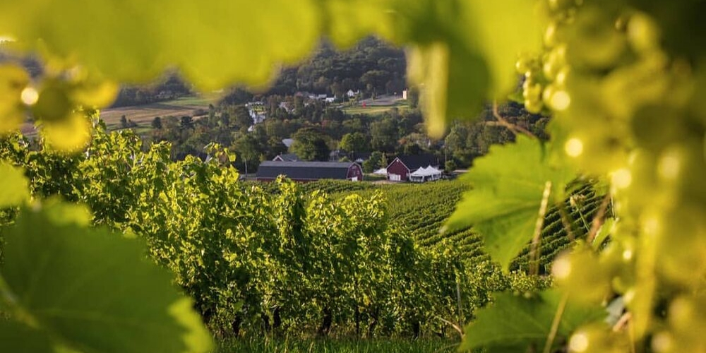 Gaspereau Vineyards, Winerist