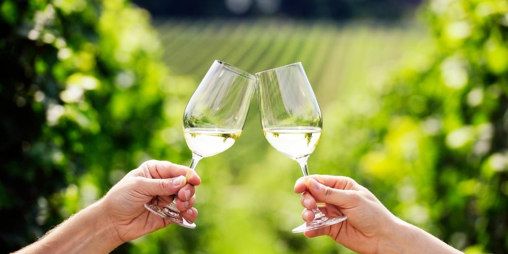 Gisborne, Wine Regions of New Zealand, Winerist