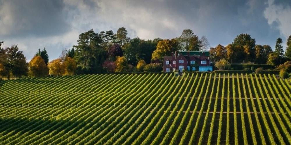 Hambledon Best Wineries in Hampshire Winerist