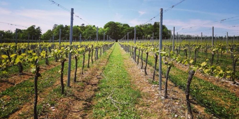 Hattingley Valley Best Wineries in Hampshire Winerist