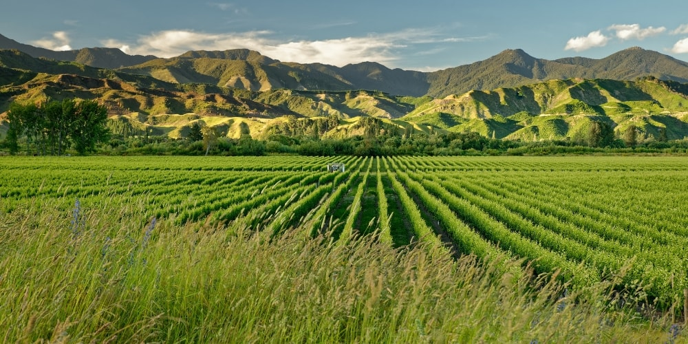 Kiwi Sauvignon Blanc The Hero White of The Wine World Winerist