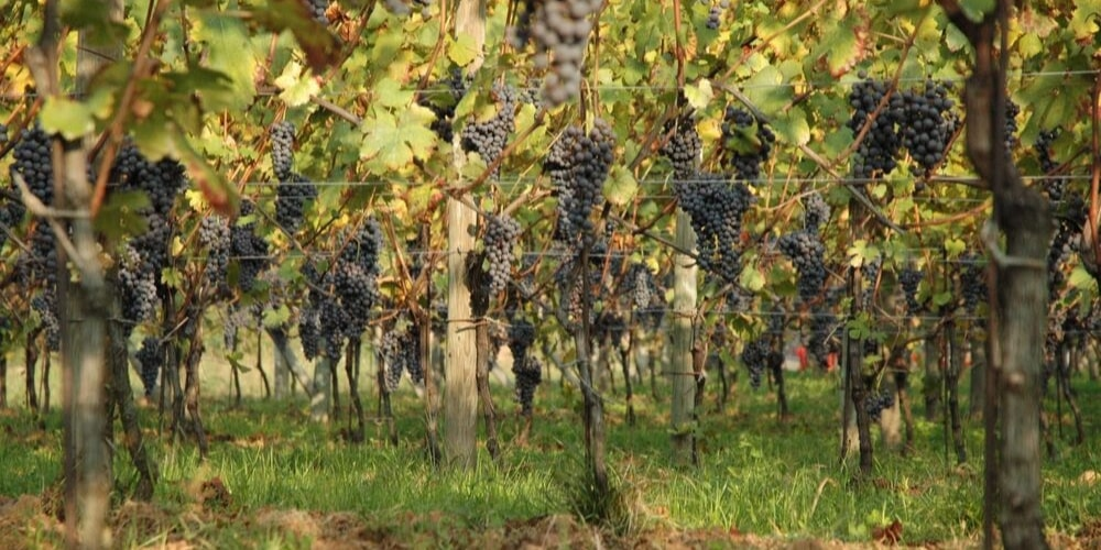 Le Piane, Top Wineries to Visit in Piedmont, Winerist
