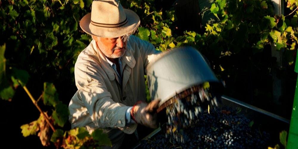 Mottura Winery, Best Wineries to Visit in Puglia, Winerist