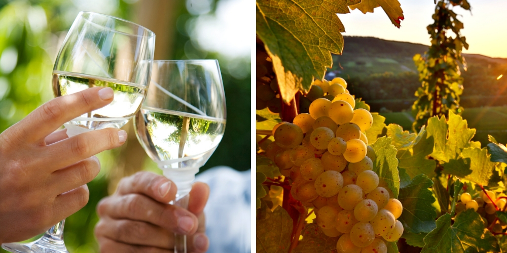 Riesling, What Are The Grape Varieties That Are Shaking Up New Zealand, Winerist