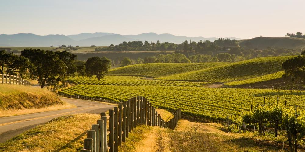 Santa Barbara Wine Destination 2019 Winerist