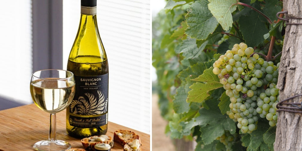 Sauvignon Blanc, What Are The Grape Varieties That Are Shaking Up New Zealand, Winerist
