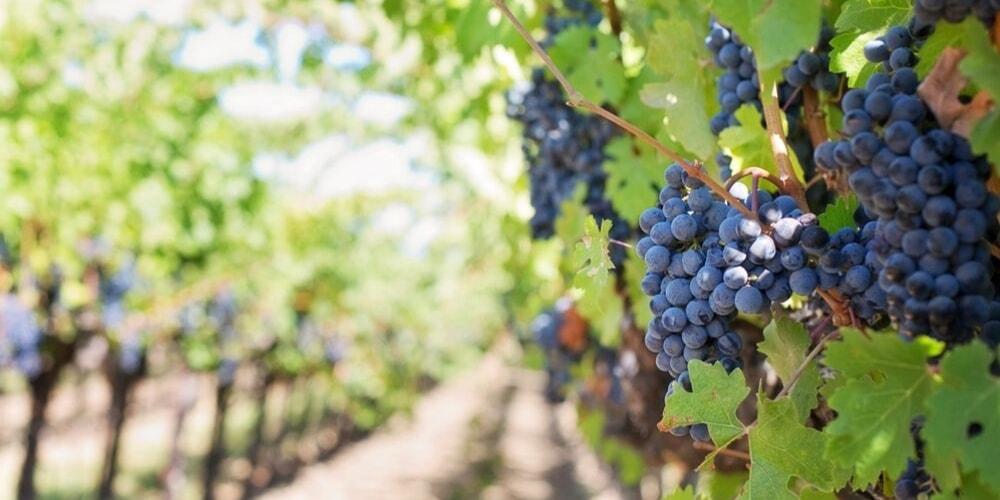 Tenute Rubino, Best Wineries to Visit in Puglia, Winerist