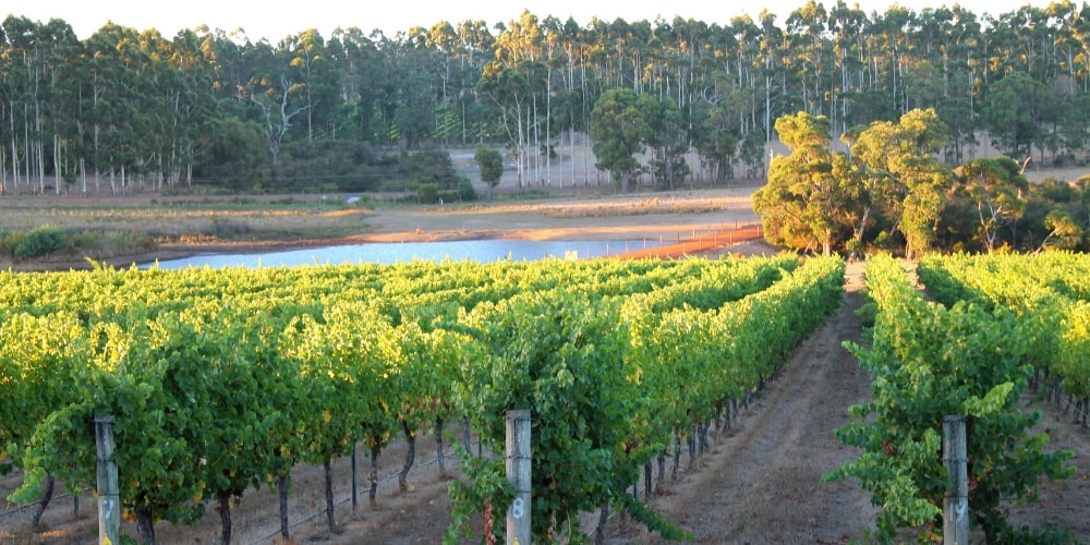 Western Australia Gourmet Escape festival of food and wine, November's Best Wine and Food Festivals Around the World, Winerist