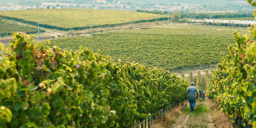 tormaresca best wineries puglia winerist.com